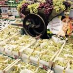 uva-italiana